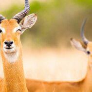 antilope-blog