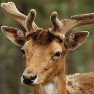 deer-blog