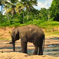 elephant-blog