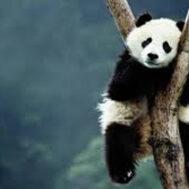 panda-blog
