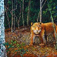 tiger-blog