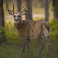 deer-campaign-image