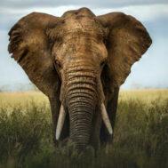 elephant-campaign-image